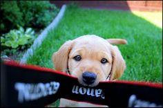 adorable puppy <3