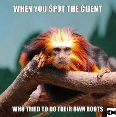 De angst of jij? Hairstylist Memes, Hairdresser Quotes, Salon Quotes, Hair Quotes, Hair Sayings, Hair Meme, Hair Humor, Funny Hair, Animal Puzzle