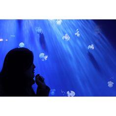 Aquarium in genova. Magical