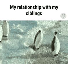 Ideas funny relationship images sad for 2019 Crazy Funny Memes, Really Funny Memes, Funny Laugh, Funny Relatable Memes, Funny Texts, Siblings Funny, Sibling Memes, Sibling Quotes, Jokes