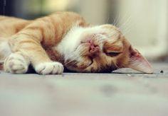 Soft Kitty by HunnyBerri