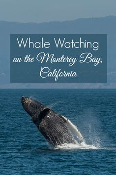 Photos from a Whale Watching Tour on the Monterey Bay, California.