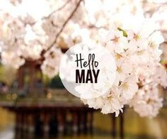80 Hello May Quotes And Sayings To Bring In The Wonderful, colorful and warm month. Enjoy these quotes for a new month and love another great may! Days And Months, Months In A Year, 12 Months, Seasons Of The Year, Four Seasons, Hello May Quotes, Star Beauty, New Month, Spring Day