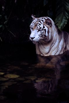 such a beautiful animal..