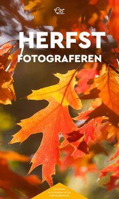 Fotografie tips herfst: leer de mooiste herfstfoto's maken, van paddestoelen tot herfstkleuren in het bos.