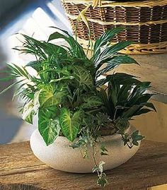Green Garden Bowl Plants European Blooming Dish