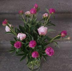 hidden home gems - belinda Gems, Website, Plants, Flower, Board, Rhinestones, Jewels, Plant, Gemstones
