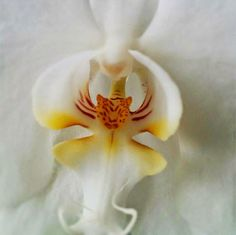 Orchid-That-Looks-Like-A-Tiger---17-Flowers-That-Look-Like-Something-Else