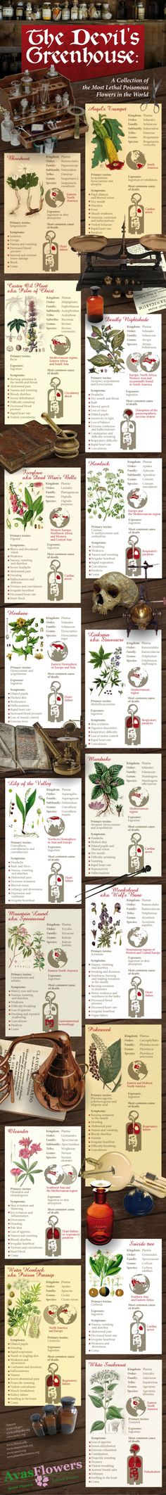 A Collection of the Harmful Poisonous Flowers in the World #Infographics