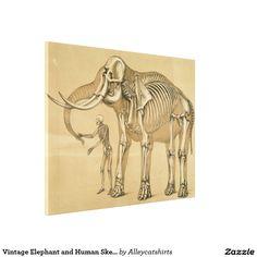 Vintage Elephant and Human Skeleton Illustration Canvas Print