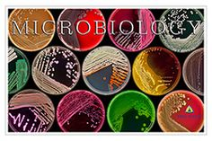 Microbiology Petri Dishes