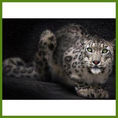 5D diy diamante pintura leopard animal imagens de strass embroidery quadrado bordado ponto cruz casa decoracao presentes W304