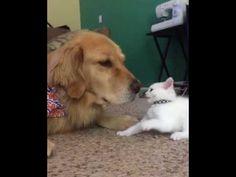 「ね、眠い…」「遊んで~」 昼寝がしたい犬と遊んで欲しい子猫 - http://naniomo.com/archives/9119