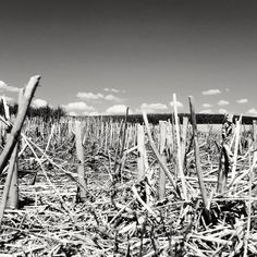 "https://flic.kr/p/vP1GZ1 | Dry  Soil or ""The Stubble field"" 