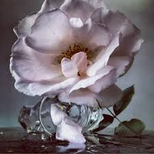 Image result for nick knight black rose