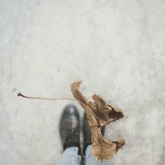 Still Life Like a leaf that flies then posarsihellip