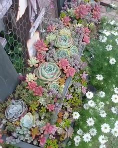 Succulent garden design is a growing trend that is gaining popularity as more and more gardeners realise the potential of this unusual and varied plant species that requires almost zero maintenance. Succulent Rock Garden, Shade Garden Plants, Succulent Seeds, Succulent Landscaping, Balcony Plants, Succulent Gardening, Planting Succulents, Container Gardening, Planting Flowers