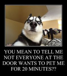 Well Ill Just Have to Change Their Minds - Funny Husky Meme - Funny Husky Quote - Sharing: You mean to tell me not everyone at the door wants to pet me for 20 minutes? Funny Dog Memes, Funny Animal Memes, Cute Funny Animals, Funny Animal Pictures, Dog Pictures, Funny Dogs, Funny Husky, Dog Photos, Siberian Husky Puppies