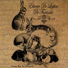 Rabbit French Handwriting Paris Fancy Rabbits Animal Scrapbooking Clipart Digital Image Download Fabric Pillows Tote Tea Towels Burlap 2991