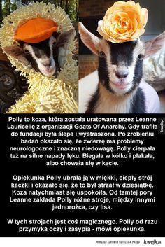 Uratowana koza pozuje w stroju kaczki i jednorożca Goats, Sweet, Animals, Candy, Animales, Animaux, Animal, Animais, Goat