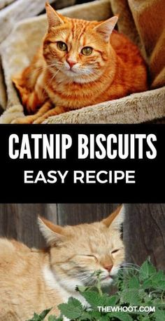 Catnip Biscuits Recipe DIY Easy Video Instructions Homemade Cat Food, Dry Cat Food, Pet Food, Dog Biscuits, Pet Treats, Crazy Cats, Cats And Kittens, Easy Video, Pets