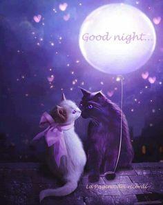 Goodnight Kitties