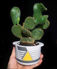 Christmas Cactus - Best Succulents For Interior Decorating - AskMen