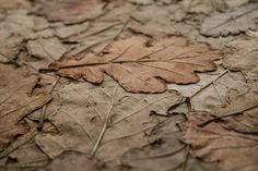 What Could You Possibly Do With Only Leaves and Threads? | Francesca Palange