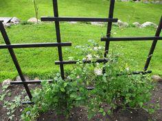 Шпалера для вьющихся растений своими руками. Опоры для плетистых роз и винограда | МирФБ