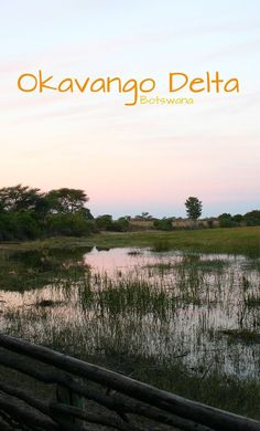 The Okavanga Delta of Botswana is a must-see Africa experience.  Yes, it is a world heritage site, but more than that it is a stunning water shed that houses an amazing variety of wildlife. Click here and read about our close-up hippo encounter! ~ReflectionsEnroute