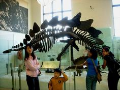 American Museum of Natural History, NYC