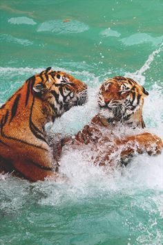 """cxx-x: """" Bubble Bath // Play time © """" Animals And Pets, Baby Animals, Cute Animals, Beautiful Creatures, Animals Beautiful, Images Esthétiques, Animal Wallpaper, Belle Photo, Big Cats"""
