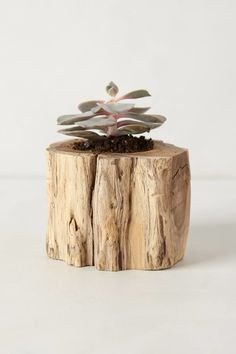 If you grow/have Succulent Plants find a branch from ground & cut n drill out small hole .. if you have a old coaster or pc. of cork glue it to that! | Tree trunk planter _