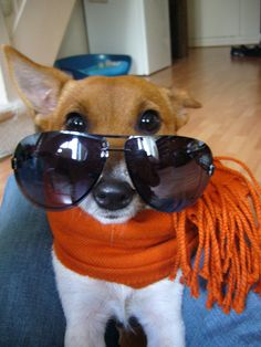 53 Perfect Photos Of Dogs Wearing Sunglasses