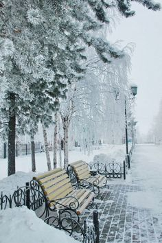 NYC. Lonely, snowy Central Park. Just look at this! It is a    D R E A M