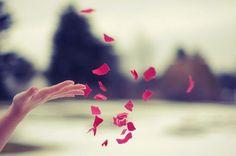 #petali di #rosa