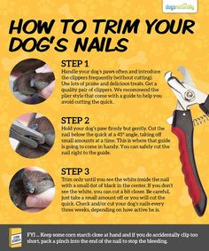 A Stress-Free Way For Trimming Your Dog's Toenails...