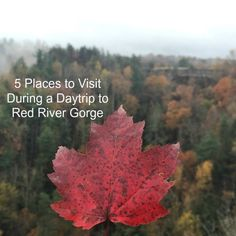 5 Places to Visit During a Daytrip to Red River Gorge in Eastern Kentucky