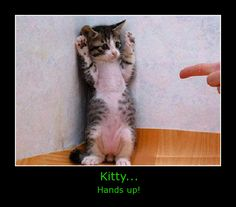 Kitty, hands up