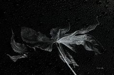 This photo consists of two layers one black and white shot of the leaf and one shot of the hood of a car in rain The image is one in a series Limited edition of 100 signed and numbered on the back Limited Edition Prints, Logo Design Inspiration, Prints For Sale, Accounting Logo, Image, Greeting Cards, Photograph, Art Prints, Gifts