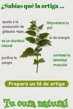 Beneficios de la La ortiga #medicina #remedioscaseros #medicinanatural