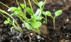 Cómo hacer un repelente, insecticida y fungicida casero | Bioguia