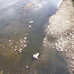 Widok na nurt rzeki Wisły. Most Świętokrzyski.