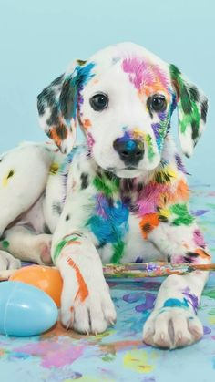 Discovered by awitijhya dey. Find images and videos on We Heart It - the app to get lost in what you love. Super Cute Puppies, Baby Animals Super Cute, Cute Baby Dogs, Cute Little Puppies, Cute Dogs And Puppies, Cute Little Animals, Cute Funny Animals, Cute Cats, Baby Animals Pictures