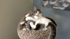 Otto meets Sock Monkey and it's love at first bite (video)