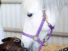 Emma and Foal Rescue Project | Medical Expenses - YouCaring.com Please help my wonderful friend, Karen, help her pony and the foal!