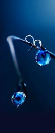 Blue. Dew Droplets