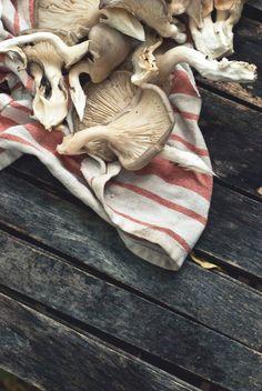 Oyster mushrooms www.jujudurham.com Deliciously Lucky! #jujudurham #asiantapas #oystermushrooms