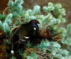 orrar i tall, Bruno Liljefors (black grouse; tetřívek obecný)