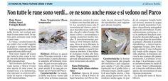 la flora e la fauna nel #parcofluviale Articolo di Adriana Robba (La Guida 6 marzo 2015)